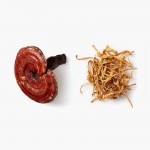 Mushrooms4Life Reishi spores & Lion's Mane 60 capsules